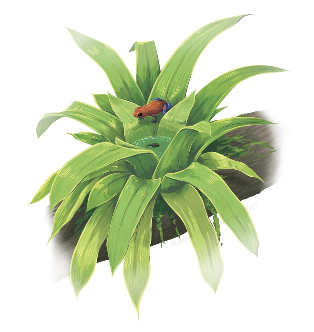 Bromeliad.png