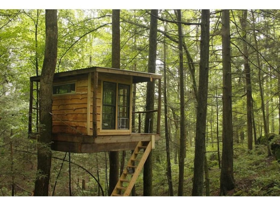 Flying-Squirrel-Tree-House.jpg
