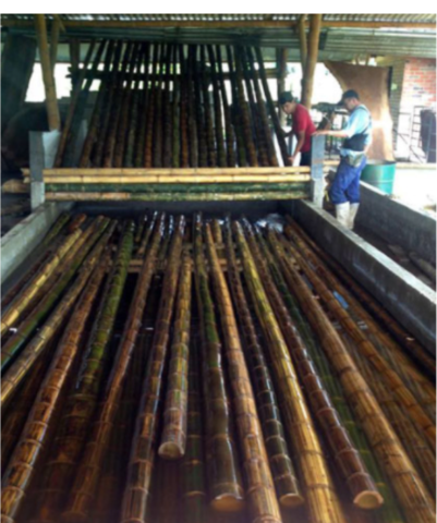 BAMBOO IS HARVESTED AND PRESERVED WITH A SOAKING METHOD.