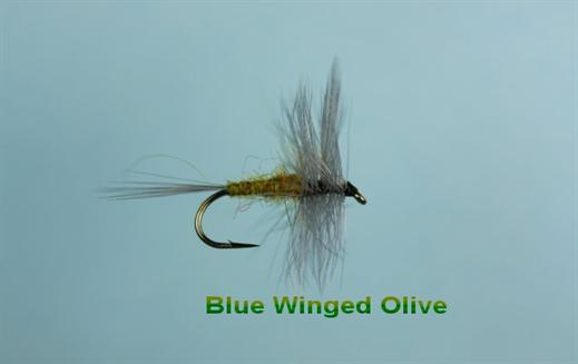 Blue Winged Olive .jpg