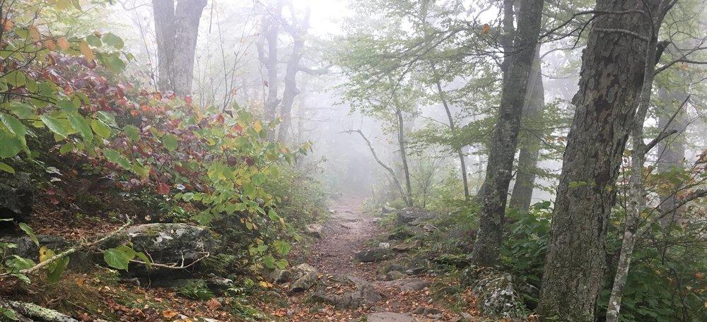 Blue Ridge Mountains, trail.jpg
