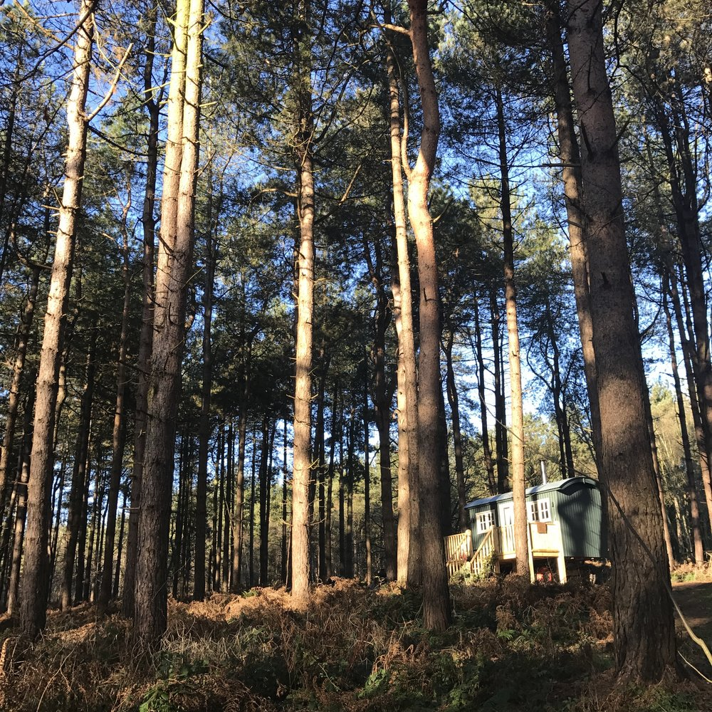 Forest Living in Norfolk