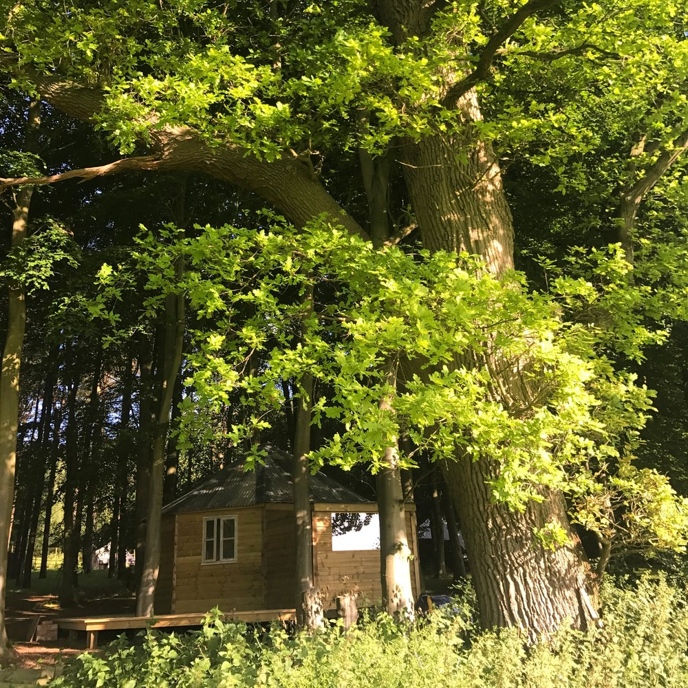 The Woodpecker has both woodland and open views, a wood burner, king size bed, bunk beds, hob etc