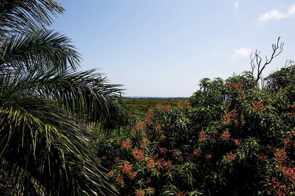 Vistas del lado Este de Utila.