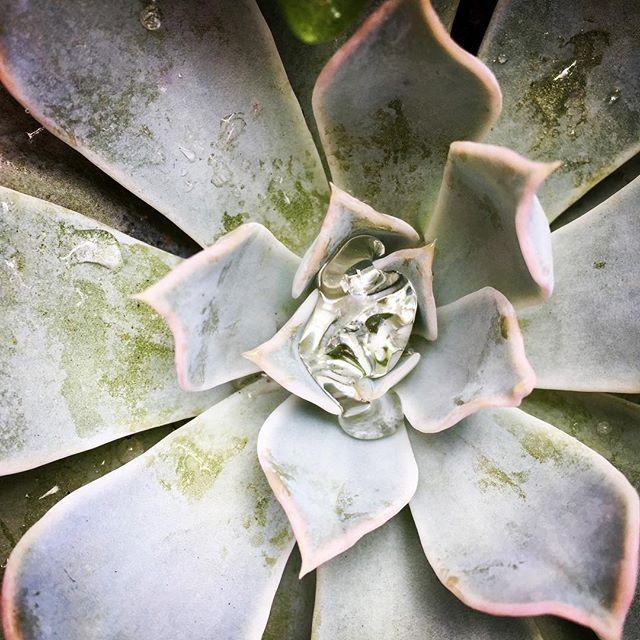 Sunday succulent #mjfotographyinc