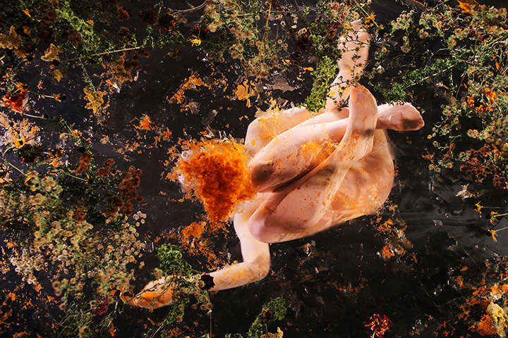 Dead Flowers 2.jpg