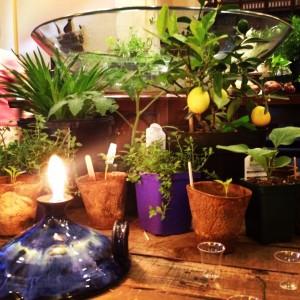 plant communion