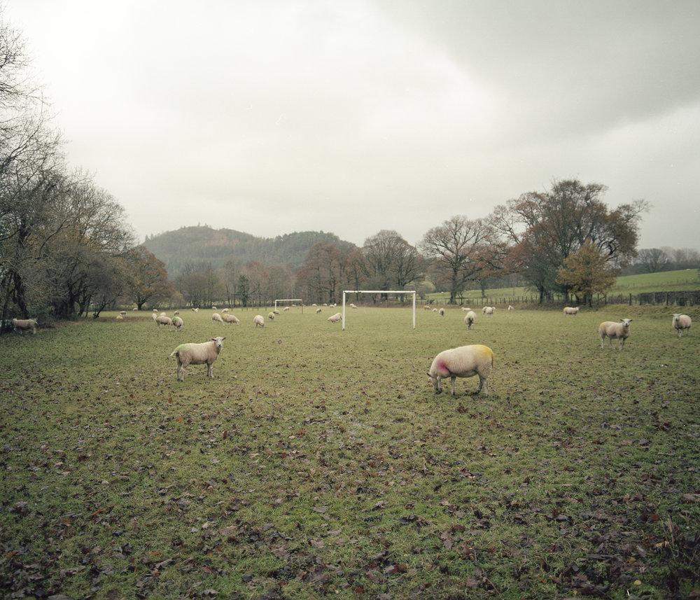 sheepfootballfield.jpg