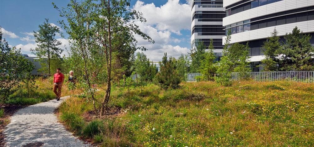 Novo_Nordisk_Nature_Park_003.jpg