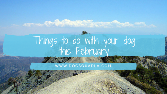 things to do with your dog this month.png