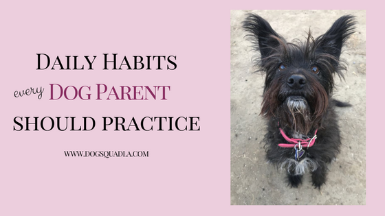 daily habits blog header.png