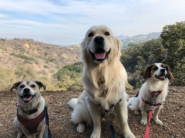 Happy dogs and a pretty view is all you need 😍