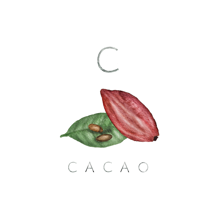 cacao copy.jpg