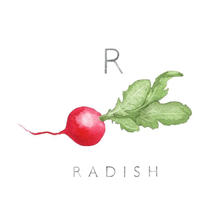 radish copy.jpg