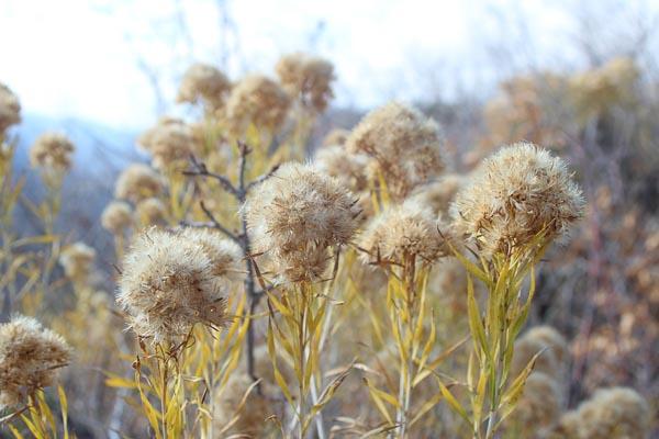 Dry-Flowers-Zion.jpg