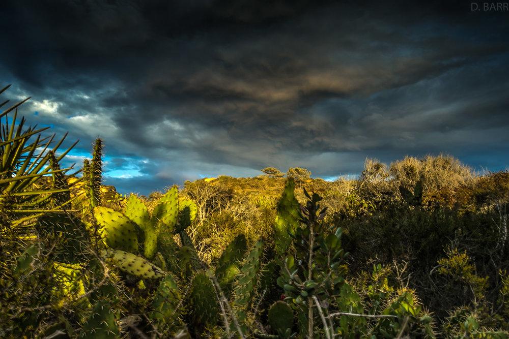 Torrey Pines (San Diego, Ca.)