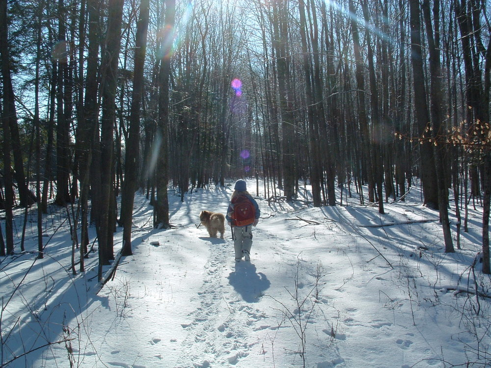 Hiking with your dog at Wellnesste Cabin Rentals in Taberg NY