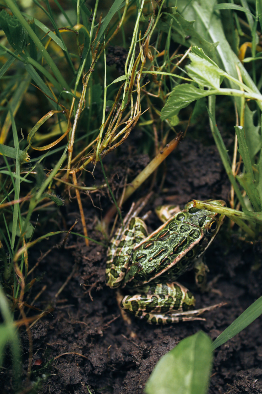 Marin_Amphibians_0893.jpg