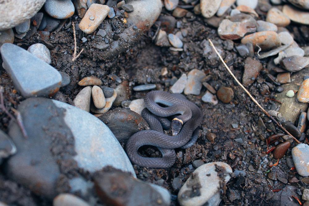 Marin_Snakes_1333.jpg