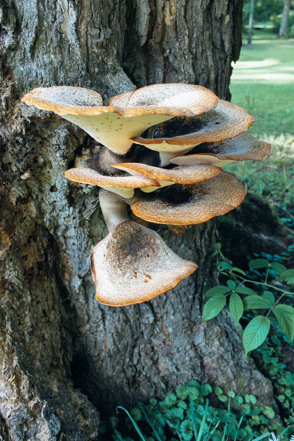 Marin_Mushrooms_1654.jpg