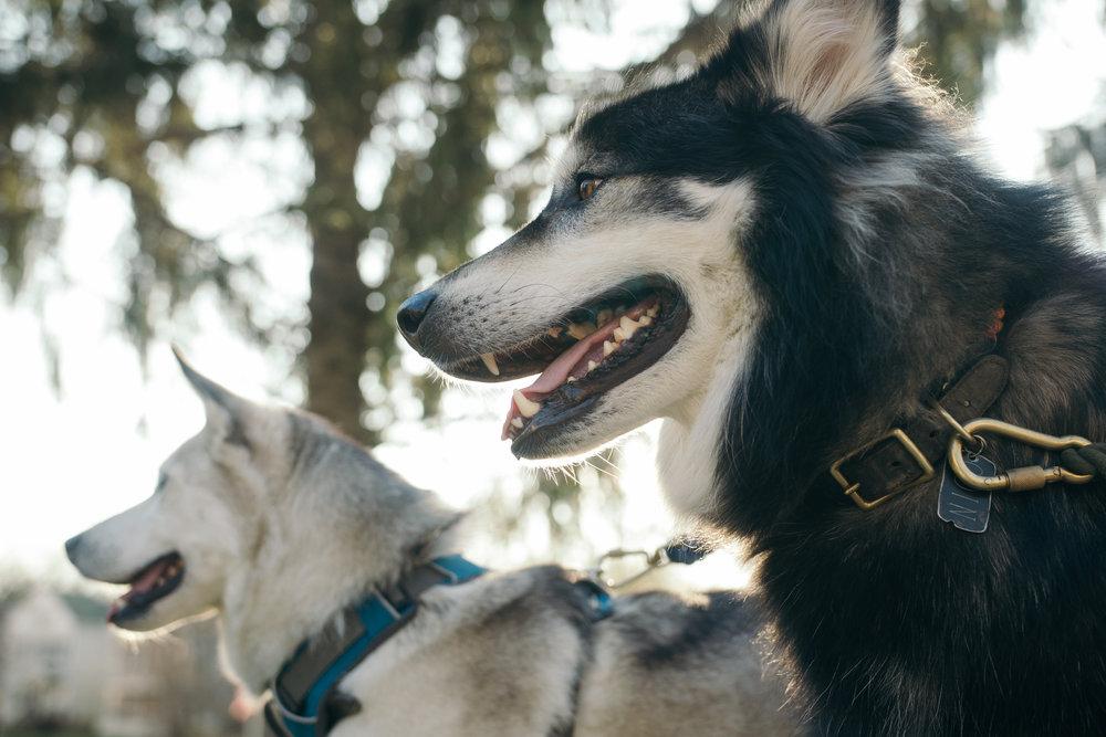 Doggos_new lens-3.jpg