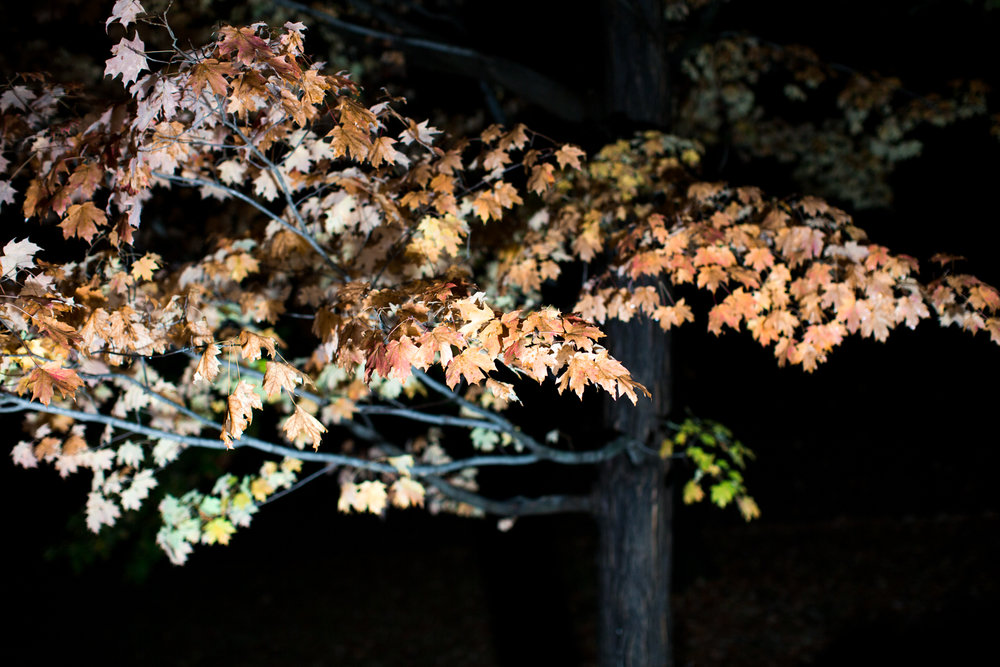 Rhinebeck Leaves-8.jpg