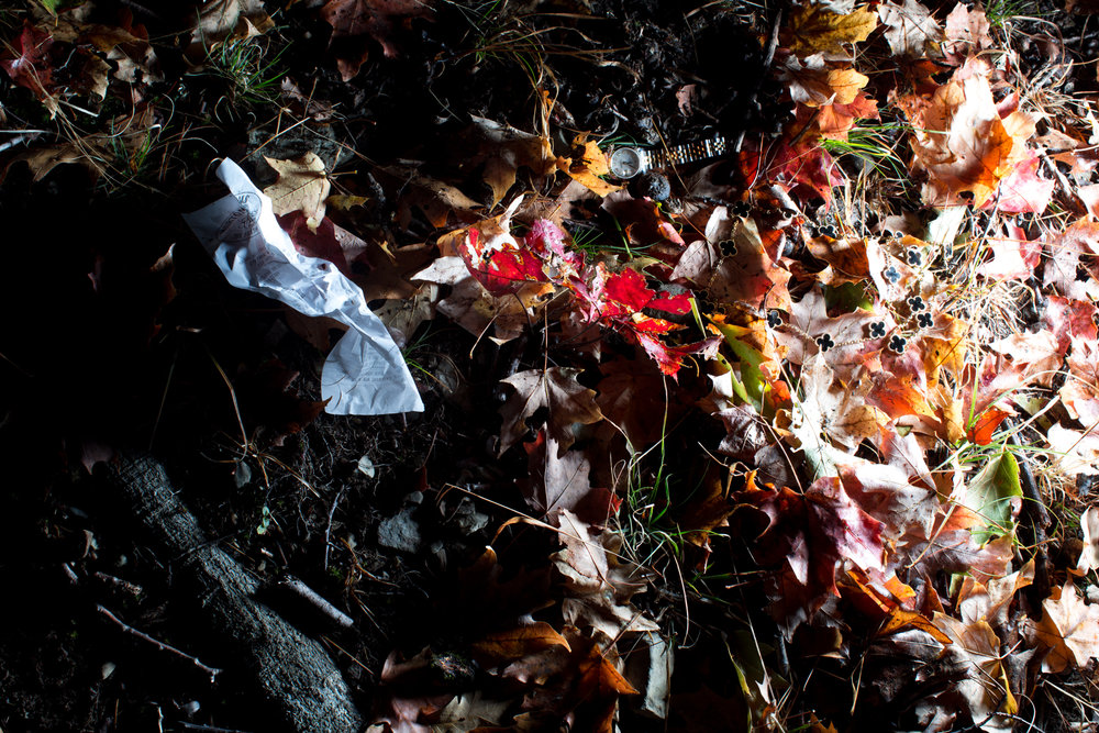 Rhinebeck Leaves-14.jpg