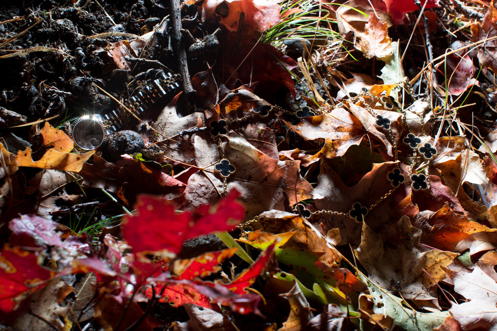 Rhinebeck Leaves-13.jpg