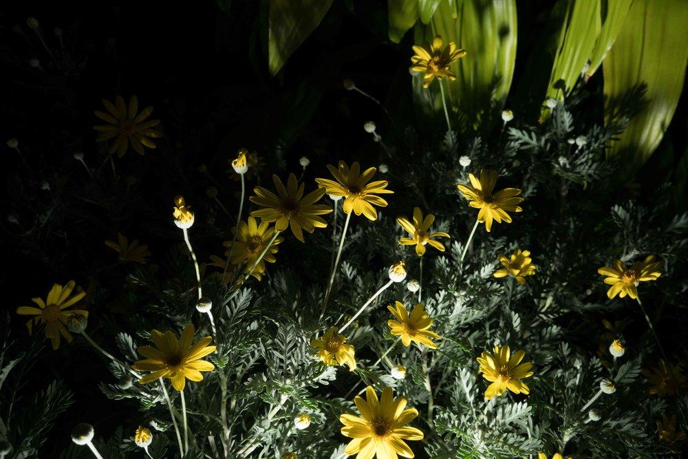 flowers-8.jpg
