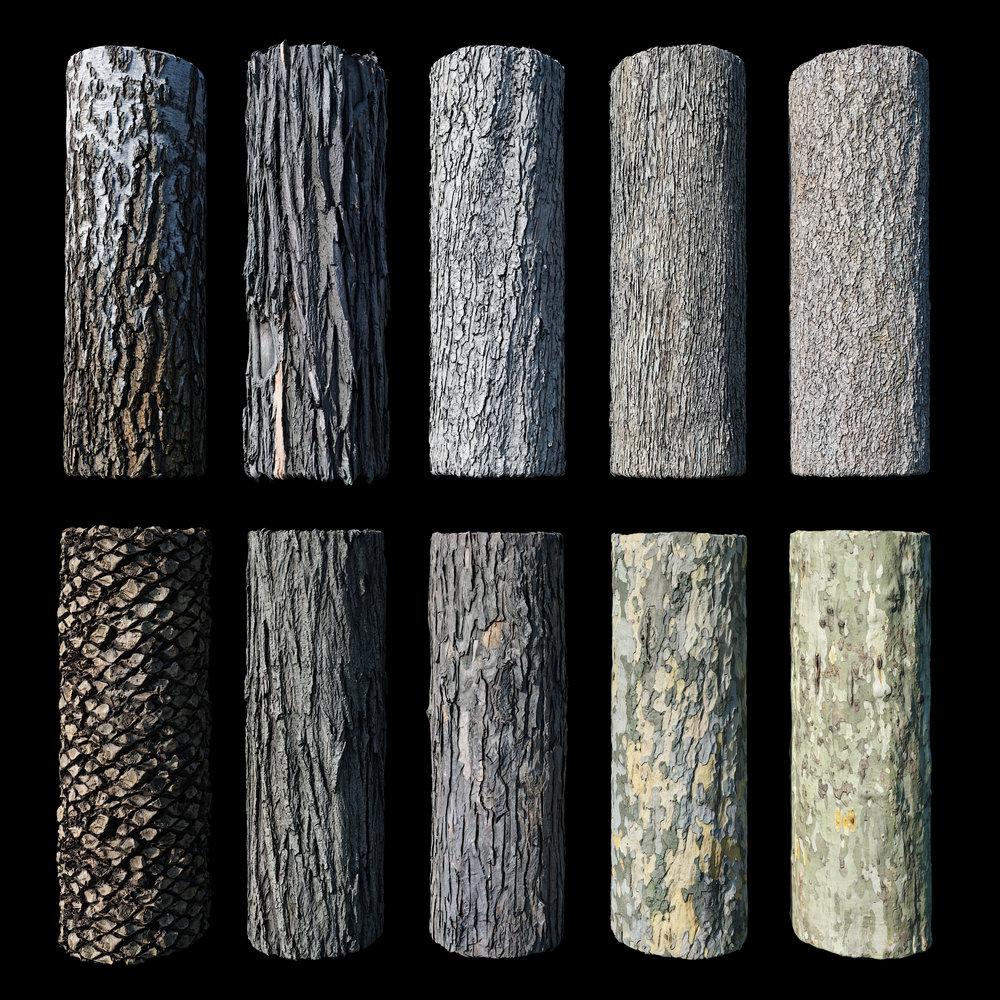 Bark Lineup.jpg