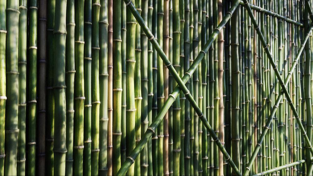 Bamboo Wall01.jpg