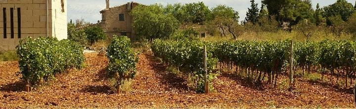 Mallorca, Majorca,  wine, winery, bodegas, wine days, Binissalem, Santa Maria, event