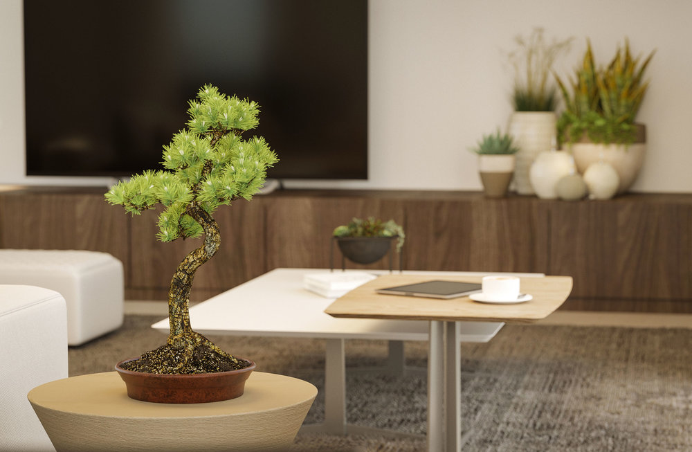 Pau-interior-3-Bonsai.jpg