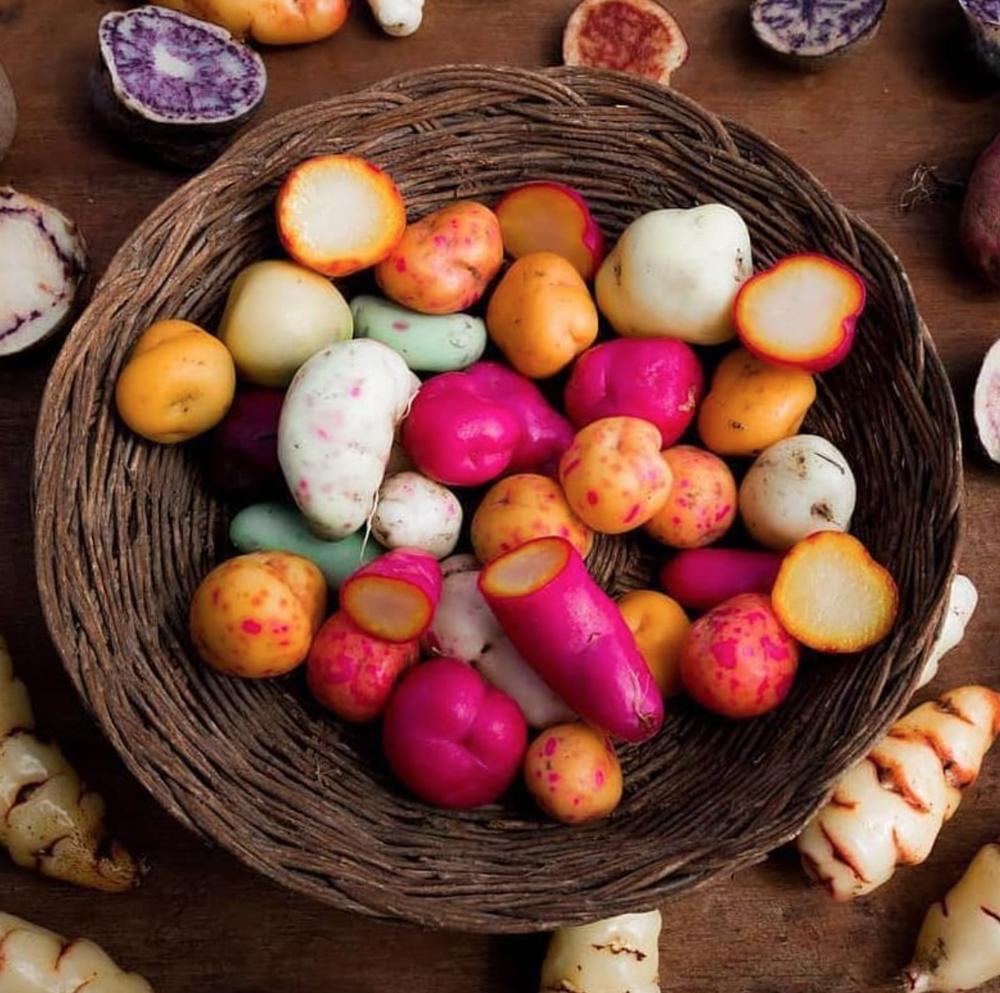 Retrouvez ces variétés de pommes de terre à la carte du restaurant Mikuna