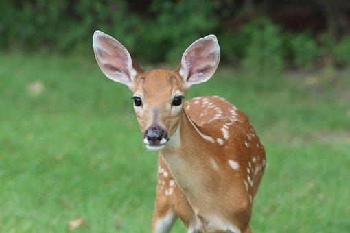 deer-2264354__340.jpg