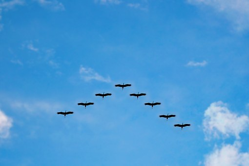 birds-216827__340.jpg