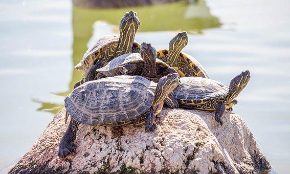 turtle-3267956__340.jpg