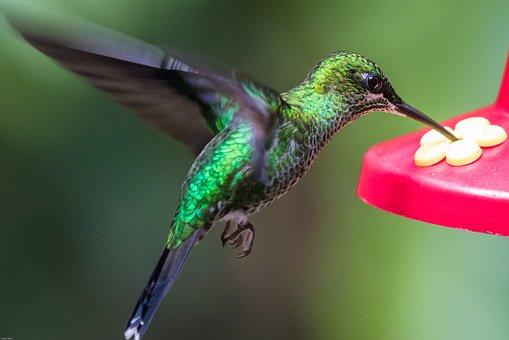hummingbird-2293297__340.jpg