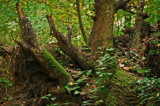 tree-1772385__340.jpg