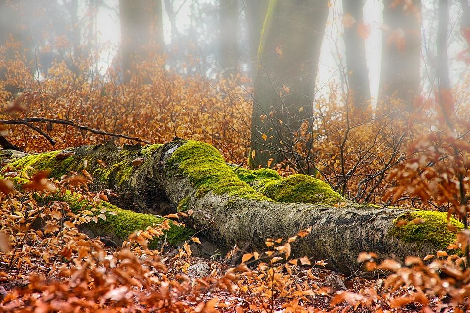autumn-3356322_960_720.jpg