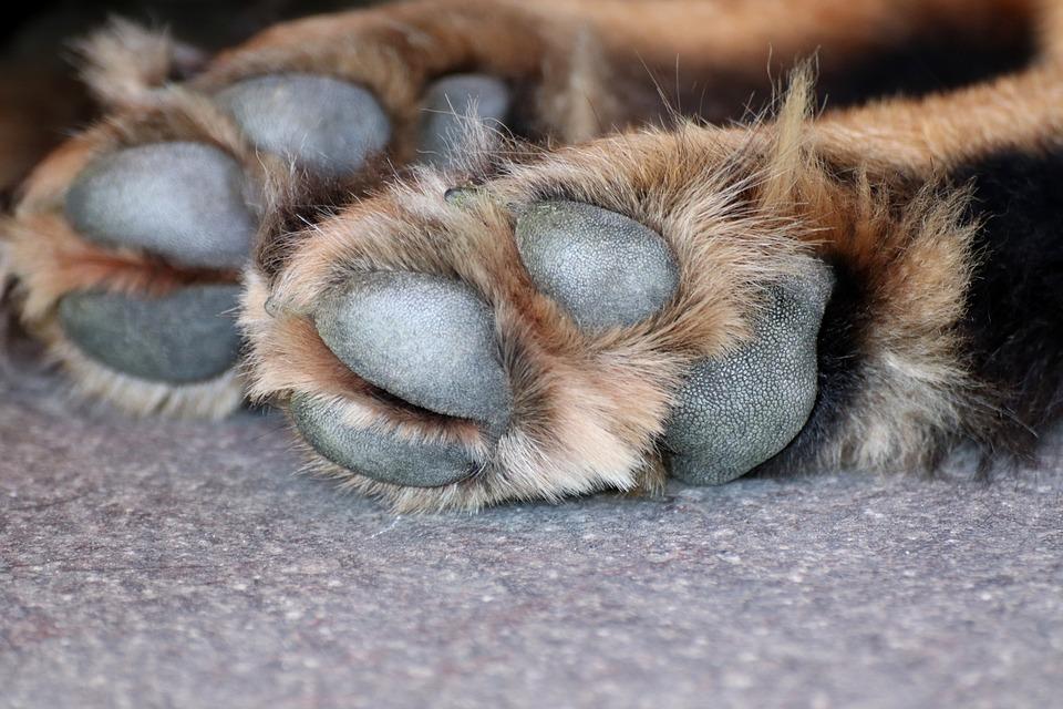 dog-paw-3612394_960_720-1.jpg