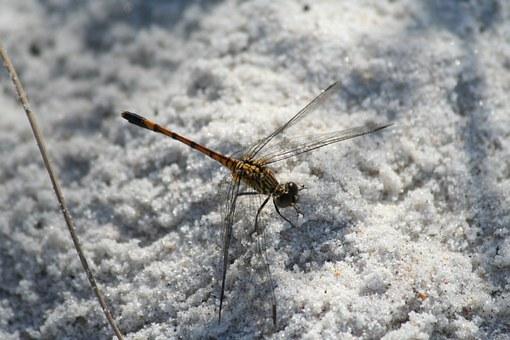 dragonfly-942483__340.jpg