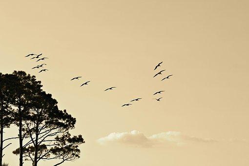 birds-1835510__340.jpg