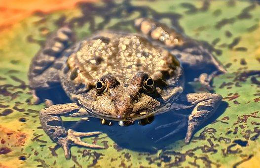 frog-3884426__340.jpg