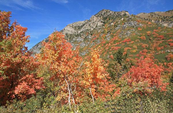 Uinta Mountains - Fall Colors
