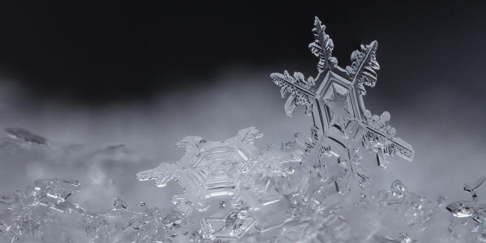 Snow Gems.jpg