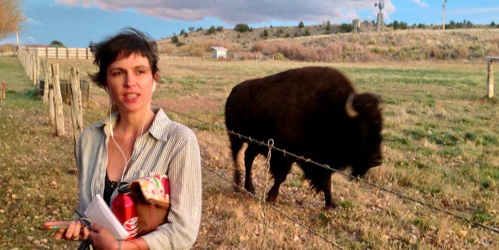 full+size+buffalo+pic.jpg