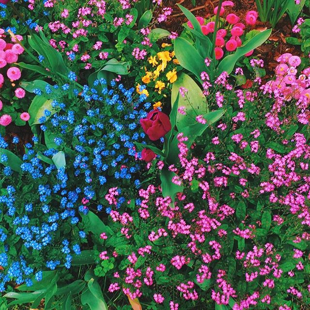 Wishing you peace and the strength of all the flowers. Everything blooms eventually.