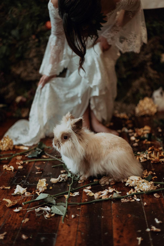 Alice-136.jpg