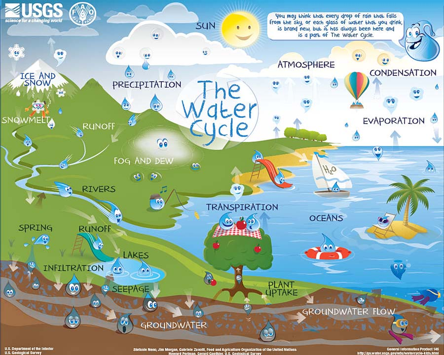 The Water Cycle: Intermediate